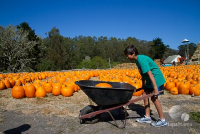 pumpkin wheelbarrow