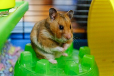 The Hamster's One Person