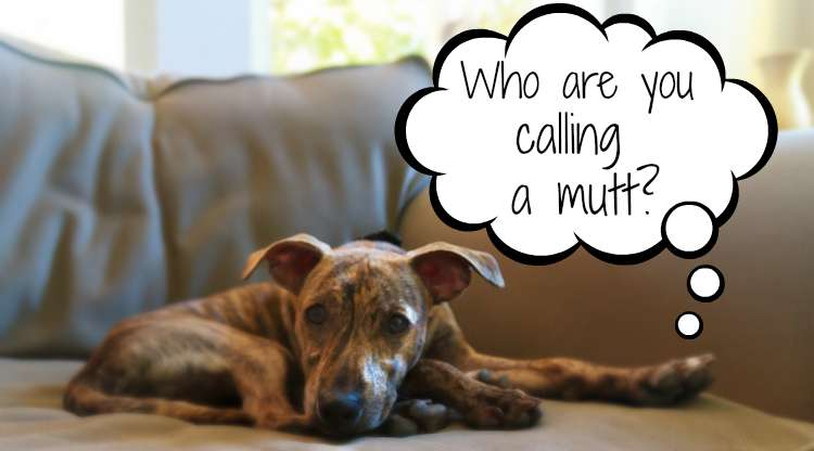 Who are you calling a mutt?