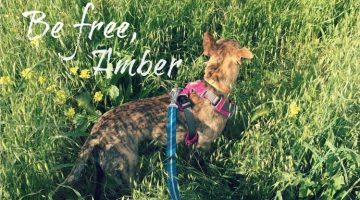 Be Free, Amber
