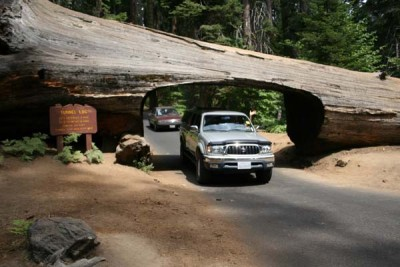 car driving through Sequoia