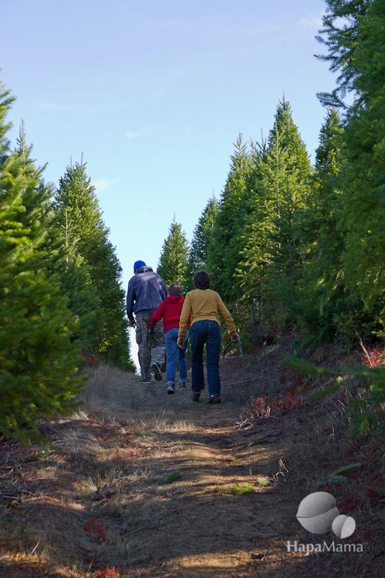 tree farm hill