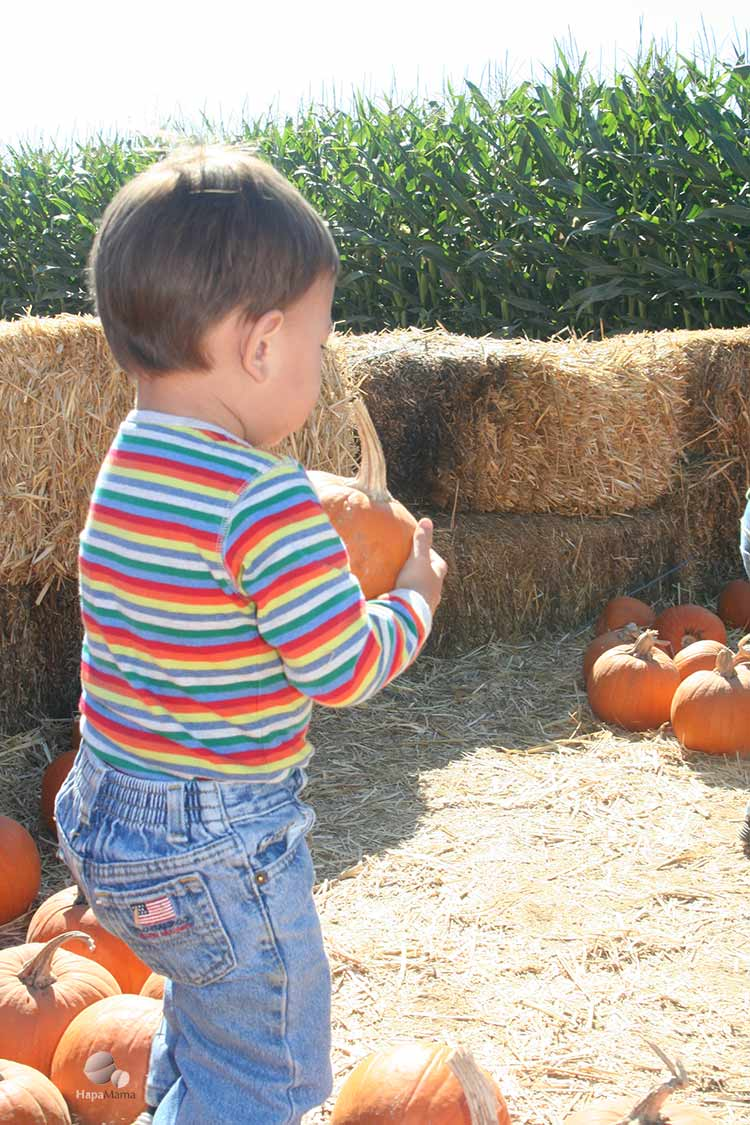 Pumpkin Patches Through the Years